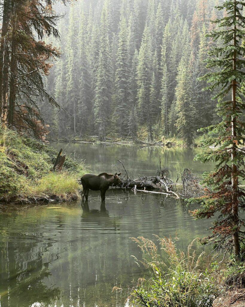 Moose Lake Loop