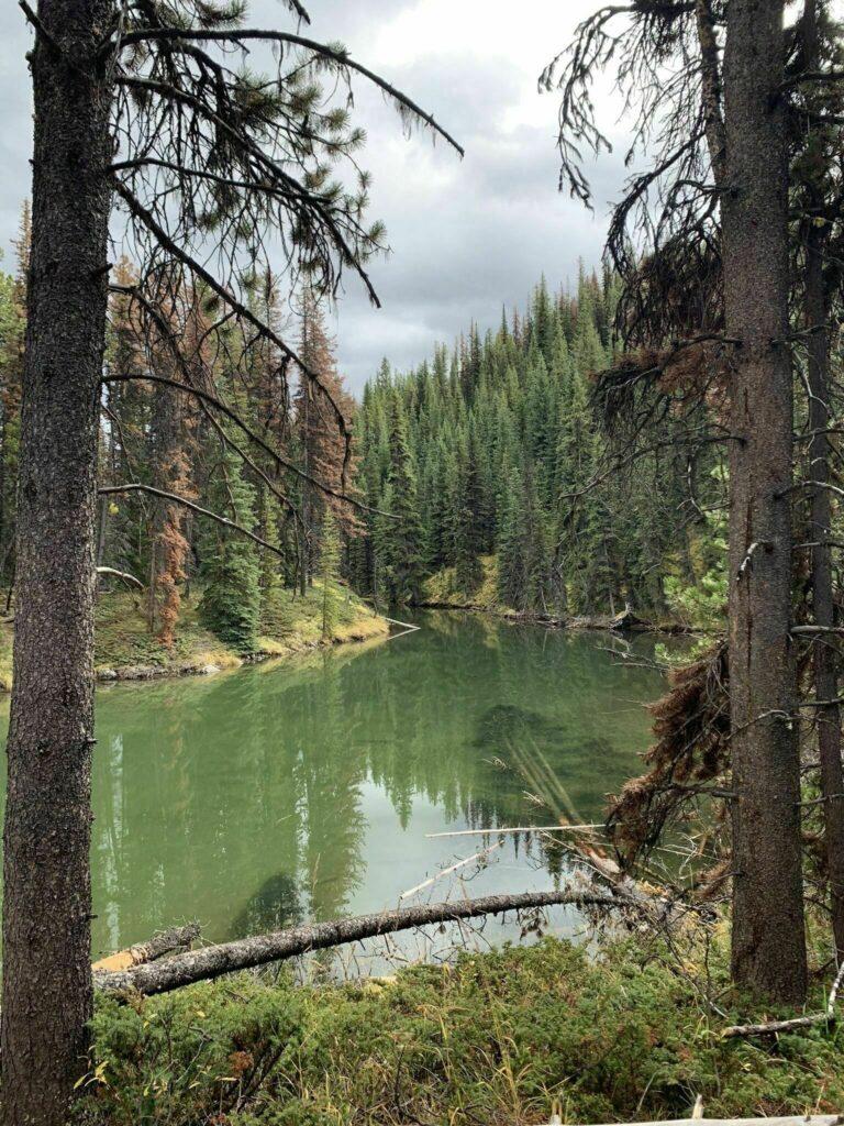 Great Divide Trail: Maligne Lake and Moose Lake Loop