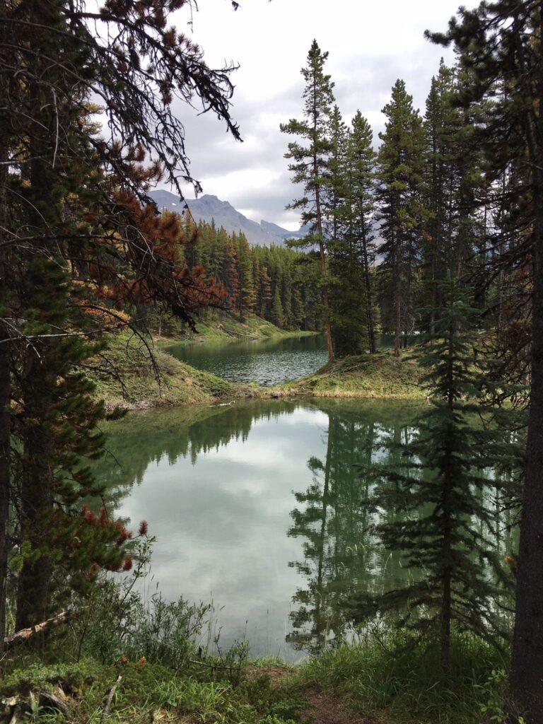 Moose Lake Trail