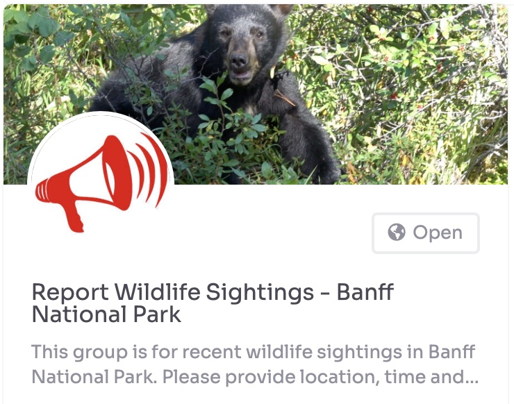 report wildlife sightings banff