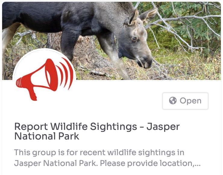 report wildlife sightings jasper