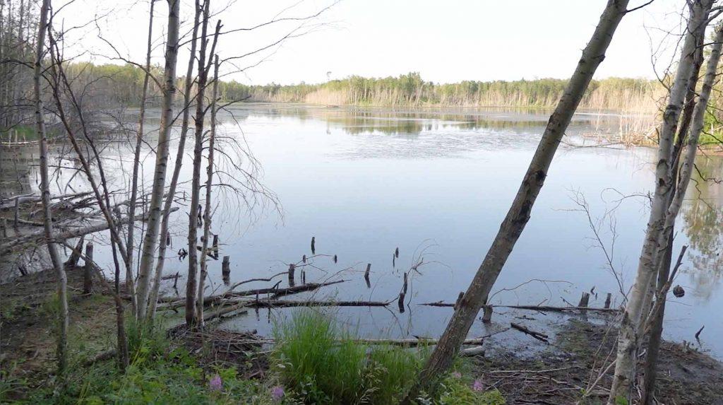 Beaver Pond Trail Pond