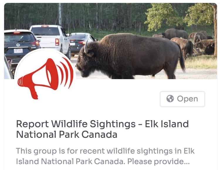 elk island national park bison